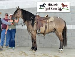 crossbred riding horse pony results mt hope auction photos of 453 566 335 488 518 588 below