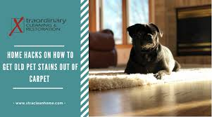 how to get old pet stains out of carpet