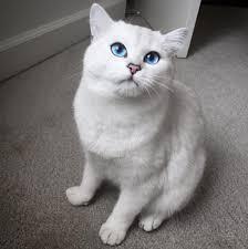 cat eyes 04