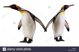 two penguins holding hands. Wonderful Holding Two Penguins At Odds With Each Other  Stock Image Intended Penguins Holding Hands O