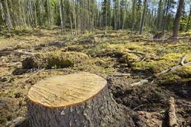 deforestation essay an alarming issue the opinion world deforestation essay an alarming issue
