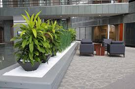 Plant Interior Design Interesting Inspiration
