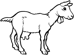 Small Picture Goat Coloring Pages phototoonme
