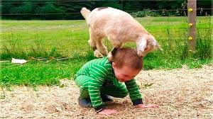Image result for funny babies animals