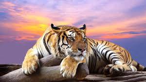 animals wallpaper. Beautiful Wallpaper 3827261 Animals Full HD Quality Wallpapers  1280x720 Px And Wallpaper I