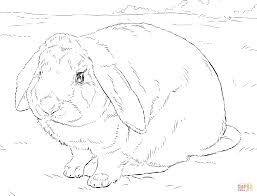 realistic rabbit coloring pages. Fine Realistic Click The Rabbit Coloring Pages  To Realistic Coloring Pages