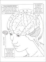 my first book about the brain coloring book 031734 details printable coloring pages human brain and neuron coloring pages labeling worksheets charts on nervous system printable