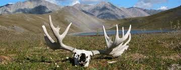 Alone Across Alaska Trip Journal Outdoor Adventures