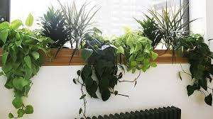 best indoor plants for office. The Best Low Light Plants For Your Desk Indoor Office
