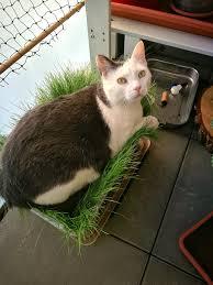 Katzen Ansufoes Tagebuch