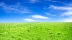 grass field background. Sky Grass Field Backgrounds Background