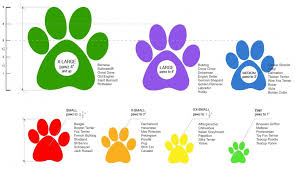 Size Chart For Pawz Dog Boots Travelin Paws Random