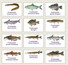 Florida Freshwater Fishing Regulations Chart Florida Fishing And Boating Laws