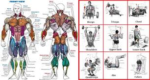 top exercises for each muscle group