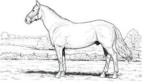 Free Carousel Horse Coloring Pages Free Horse Coloring Pages Horse
