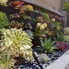 Small Picture 473 best Succulents images on Pinterest Succulents garden