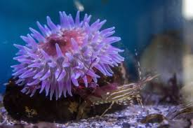 oregon coast aquarium newport oregon hanging out with the shrimp and anemone