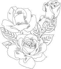 Disegno Di Rosa Double Delight Da Colorare Disegni Da Colorare E