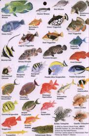 Clown Fish Identification Chart Indian Ocean Fish Guide To Reef Fish Of The Indian Ocean