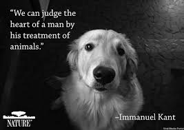 Inspiration Inspirational Ideas Dog Quotes Dogs Animals