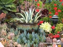 Small Picture Succulent Home garden landscaping ideas YouTube