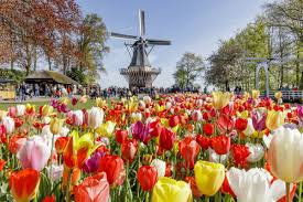 keukenhof gardens 2020 amsterdam holland opening hours s and travel directions