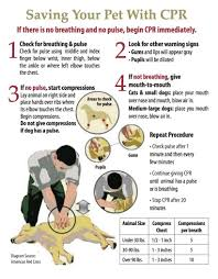 Free Printable Cpr Chart Free Printable Pet Cpr And Emergency Dog Pet Medical
