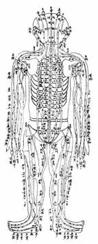 Chinese Acupuncture Chart Showing The Kidney Meridian