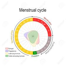 Period Cycle Chart Menstrual Cycle And Hormone Level Ovarian Cycle Follicular