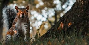 find squirrel repellents solutions that work