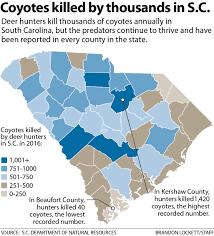 Deer Movement Chart South Carolina Coyotes Flourish In South Carolina As Some Neighborhoods
