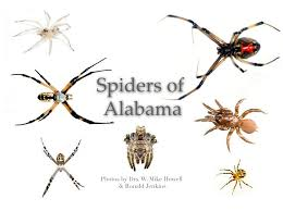 58 Spiders In Alabama You Should Know Garden Spider