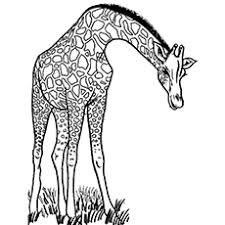 Top 25 Free Printable Wild Animals Coloring Pages Online