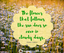 Love Flower Quotes Amazing 48 Beautiful Flower Quotes SayingImages