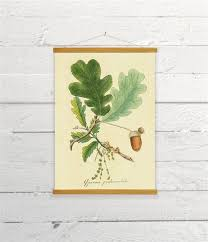 Oak Tree Size Chart Vintage Botanical Oak Tree Branch With Leaves And Acorn Canvas Poster Print Wooden Wall Chart Size A3 16x11