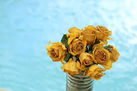flower yellow rose and bouquet hd