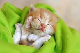 newborn orange tabby kittens. 03 Throughout Newborn Orange Tabby Kittens Kimballstock