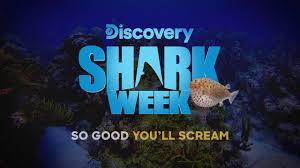 Image result for shark week specials