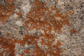 mold comes in a variety of colors and can grow on a number of diffe surfaces