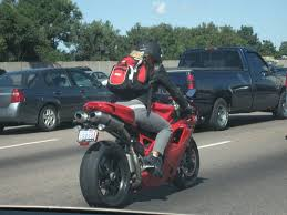 re pet dog on a sportbike