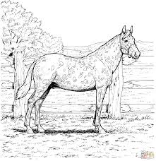 Small Picture Appaloosa Horse with Leopard Spotted Coat coloring page Free
