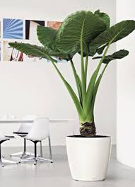 office plant displays. Stylish Interior Office Plant Displays I