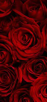 Dark blue : Dark Red Rose Wallpaper Iphone