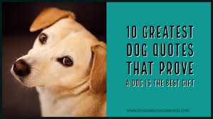 10 Greatest Dog Quotes That Prove A Dog Is The Best Gift Dogs Are