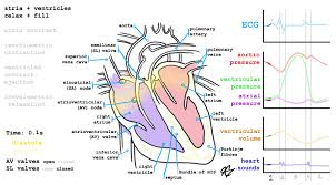 Pathophysiology Of Chf Heart Failure Background And Pathophysiology Tl Dr Pharmacy