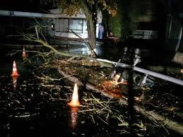 "Результат пошуку зображень за запитом ""вночі впало дерево"""