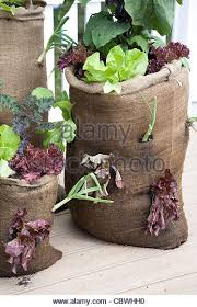 garden in a bag. Garden In A Bag - Stock Image