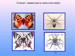 Осевая и центральная симметрия презентация по Геометрии Осевая симметрия в животном мире