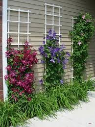 Top 5 Climbing Plants For Fences And Trellis  GardensecretscoukClimbing Plant Trellis