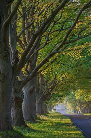 Tree Wallpapers: Free HD Download [500+ ...